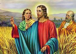 Jesus en el campo de espigas